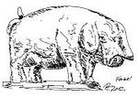 ob schwein